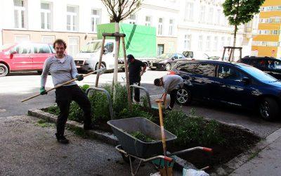 Bepflanzte Baumscheiben – kleine Grünoasen