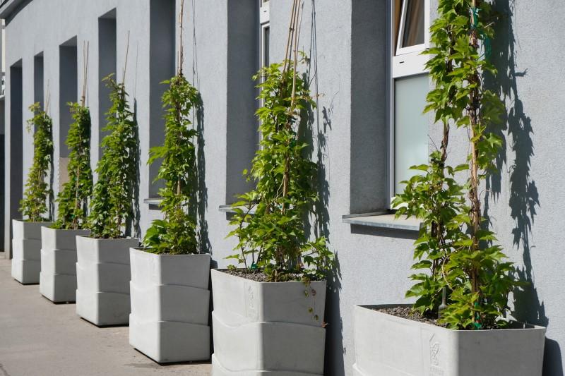 Neues Angebot für geförderte Grünfassaden in Wien